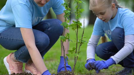 krzak : Happy female volunteer smiling to daughter planting tree in forest, ecosystem