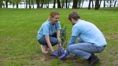 ekosistem : Young male and female volunteers planting bush sapling park, smiling each other
