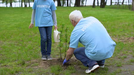 restaurar : Girl volunteer watering can helping grandfather plant tree, smiling each other