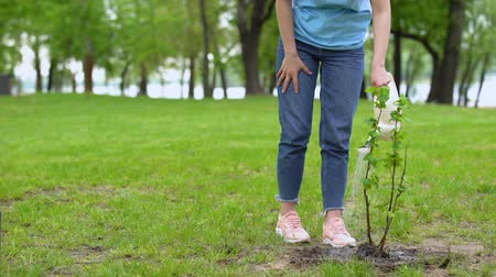kutuları : Smiling female volunteer watering bush in park looking tree, respect of nature