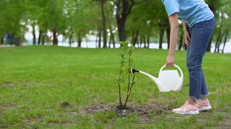 kutuları : Young woman with watering can taking care of tree, environmental volunteering