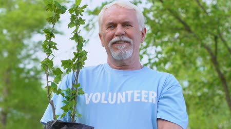 preservation : Smiling senior male volunteer holding tree sapling, nature conservation, ecology Stock Footage