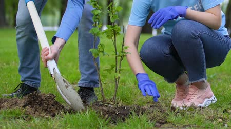 ekosistem : Two volunteers planting tree in park, nature conservation, reforestation project