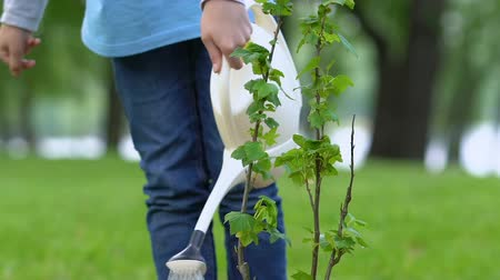 kutuları : Schoolgirl watering bush sapling with can, nature conservation, ecology concept