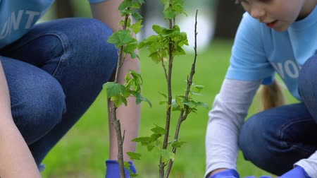 activist : Mother and daughter volunteers planting tree in park, social eco project, nature