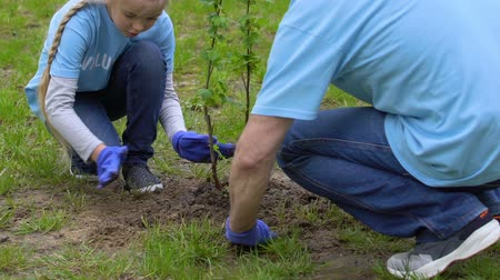 ekosistem : Smiling little girl and aged man volunteers planting tree in park, green future