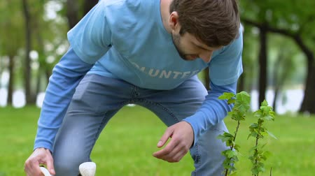 kutuları : Male volunteer watering tree sapling in park, nature care environment protection