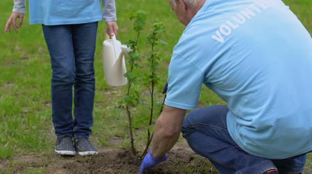 саженцы : Grandfather and little female kid volunteers planting and watering tree sapling