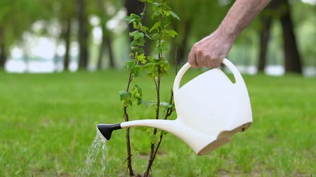 restaurar : Aged man hand watering bush sapling with can in park, environment protection