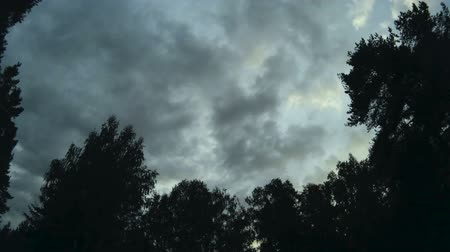coulds : clouds float across the sky. Forest and sky with clouds