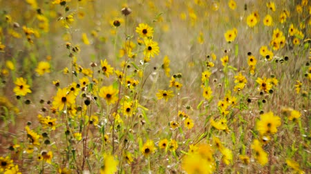 alerji : Field of Wild Flowers - Time Lapse