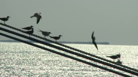 kable : Birds on a Wire  Time Lapse