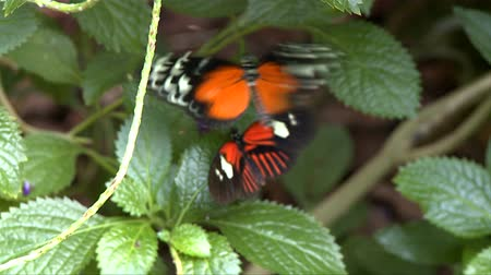 natura : Butterfly in Nature Conservatory Wideo