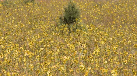 alergia : Field of Wild Flowers Time Lapse