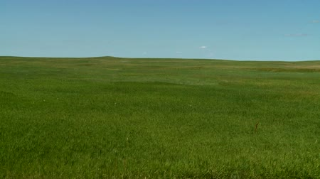 sul : Flowing Grasslands in South Dakota Vídeos
