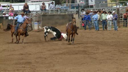 секунды : Rodeo Cowboys - Bulldogging Steer Wrestling in Slow Motion