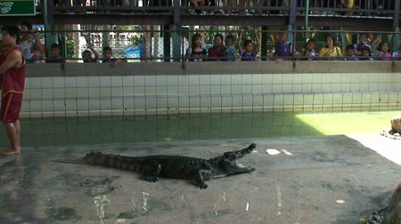 wildtiere : Alligators im Wildlife Zoo Thailand Videos