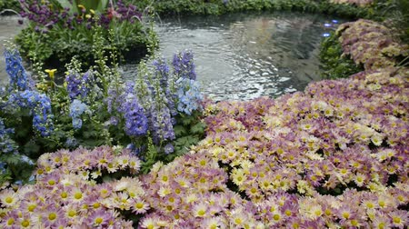 perennials : Botanical Garden in Las Vegas