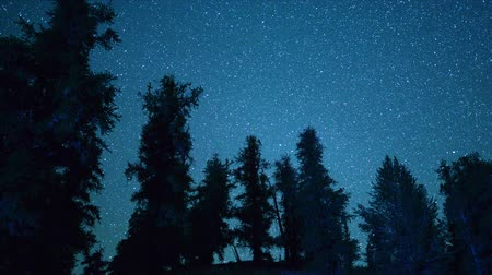 perseids : Ancient Bristlecone Pines