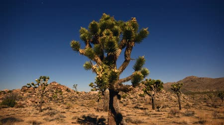 kaktusz : Time Lapse from Joshua Tree National Park Stock mozgókép