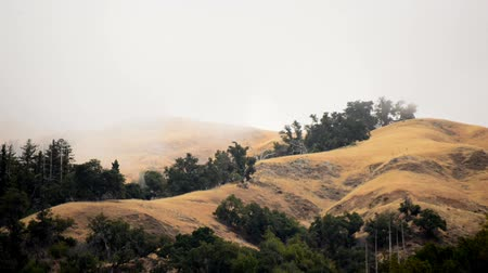nedvesség : Scenic Woods in Central California