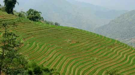 терраса : Time Lapse of Scenic Rice Terraces in the Northern Mountains of Vietnam -  Sapa Vietnam