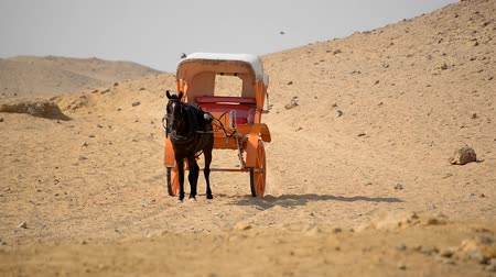 sáně : Black Horse & Carriage in the Egyptian Desert
