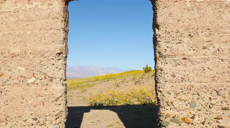 mijnbouw : Dolly Pan van Verlaat Ashford Mill & Wildflowers Daytime - Death Valley Stockvideo