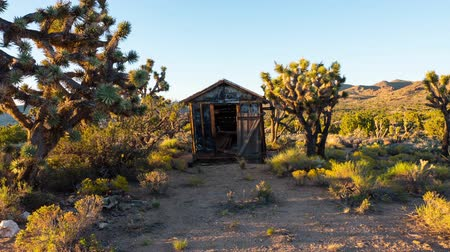 tuvalet : Time Lapse of Abandon Shack with Joshua Trees in the Desert