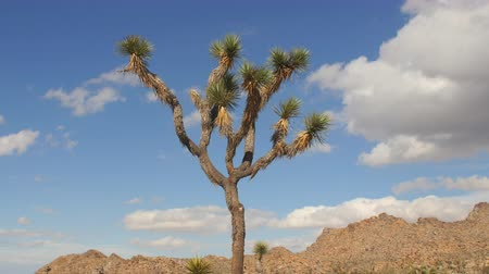 luz do dia : Zoom Out - Time Lapse of Joshua Tree  - Joshua Tree National Park