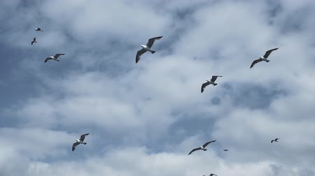seagulls flying in the sky Wideo