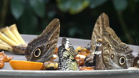 owady : Tropical butterfly on plate