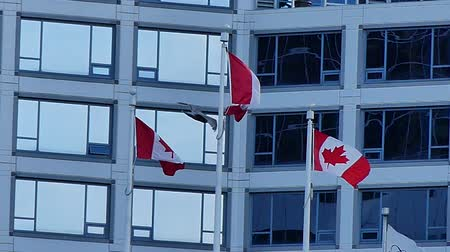 canadense : Canadian flags bird flying