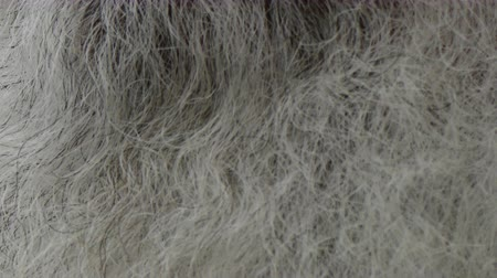 борода : Grey beard background texture closeup