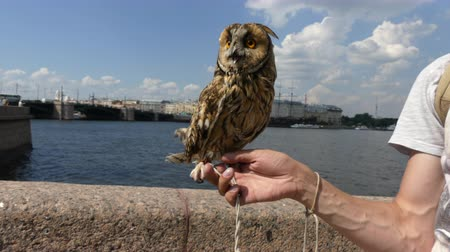 moudrý : Owllooking around city day