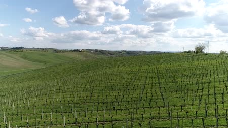 vernal : Overview of vineyards