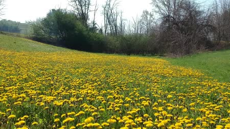 vernal : Tarasco flower meadow