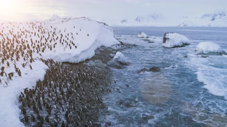 Penguins colony on Antarctica shore. Aerial drone flight. Overview of Antarctic snow-covered land, polar ocean. Behaviour of wild animals. Ice cold water. Huge snowdrifts on frozen land. 4k footage.
