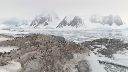 Penguins Colony Standing On Antarctica Mountain. Aerial Flight Over Polar Surface. Snow Covered Mountains Surrounded By The Frozen Ice Ocean Water. Behavior Of Wild Animals. Winter Scene. 4k Footage. Стоковые видеозаписи