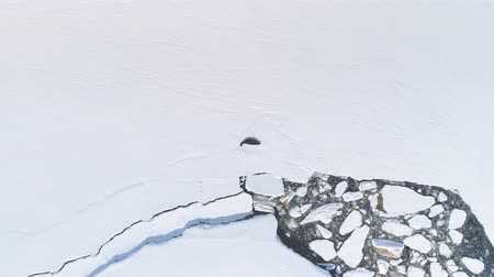 Sea Seal Zoom Out Aerial Shot in Antarctica. Snow Covered Land, Ice Ocean. Flight Over Water Hole Among Polar Surface. Drone Overview Of Antarctic Shoreline. Winter Landscape. Wild Environment. 4k Footage. Стоковые видеозаписи