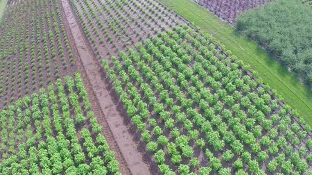 nasiona : Cultivation of plants panorama, general plan, Garden center, Aerial shooting, from above
