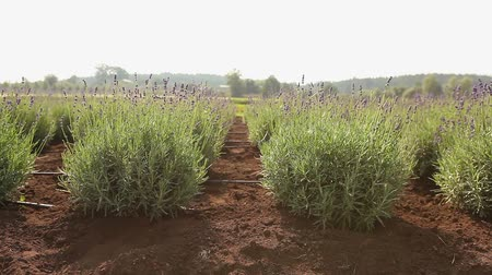 row : Cultivation of plants panorama, general plan, Garden center, watering plants, growing seedlings Stock Footage