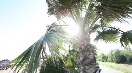 filipíny : Palm trees swaying in wind against beautiful surf and blue clear sky on background. Tropical plants growing on exotic paradise island concept