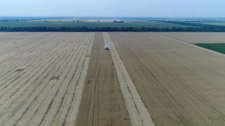 szalma : Aerial view on the combines and tractors working on the large wheat field, Harvester on the wheat field, Green harvester working on the field, View from above, the field harvesting wheat, aerial, 4k