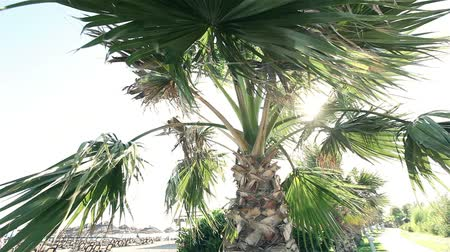 parafusos : Palm trees swaying in wind against beautiful surf and blue clear sky on background. Tropical plants growing on exotic paradise island concept