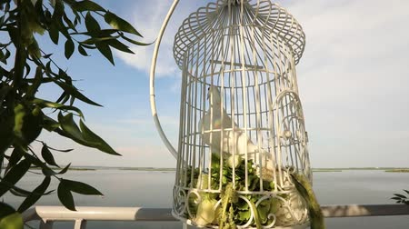 preparado : white wedding pigeon wait in a cage on the newlyweds