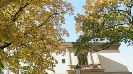 exterior : Beautiful big tree with autumn yellow leaves in front of the old villa, tree with yellow leaves on the background of an old building and a street lamp Stock Footage