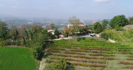 row : Lines of vineyard rows, green grass below and golden leaves, top of a hill, vineyard in fall, top view, closeup, leaves, aerial, vineyards, rows of vineyards, leaves, France, Chateau, Italy, house Stock Footage