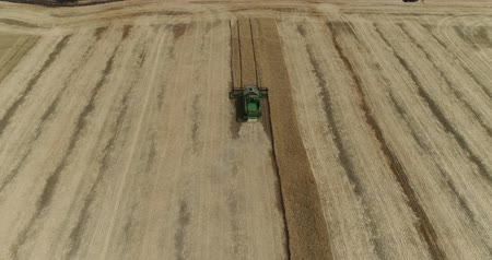 grain growing : Aerial view on the combines and tractors working on the large wheat field, Harvester on the wheat field, Green harvester working on the field, View from above, the field harvesting wheat, aerial, 4k