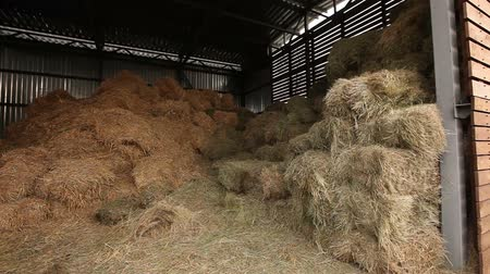 szénaboglya : Hangar with hay, hay in stock, shed with hay panorama, Farm Exterior Stock mozgókép